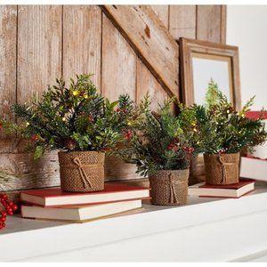 Set of 3 Mini Christmas Greens in Pots